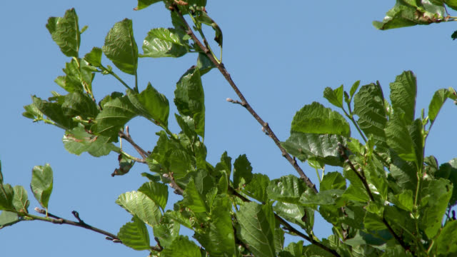 Leaves on a tree Close up of branches blowing in the wind dumfries and galloway stock videos & royalty-free footage