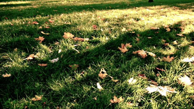 leaves on grass video