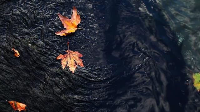 Leaves on Lake Water