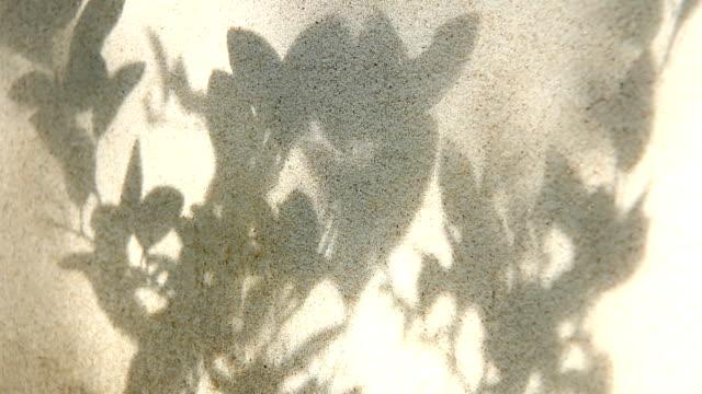壁、チェンマイ タイの葉影 - 影点の映像素材/bロール