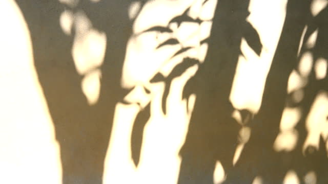 Leaves shadow on the wall , chiangmai Thailand video