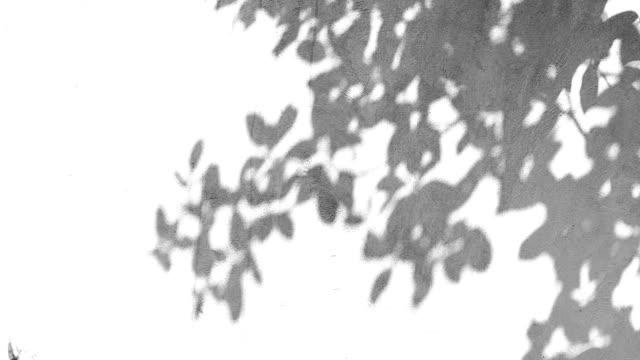 在牆上留下陰影 - 影 個影片檔及 b 捲影像