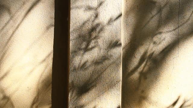 Leaves  shadow on the wall Leaves  shadow on the wall  , outdoor  Chiangmai  Thailand botany stock videos & royalty-free footage