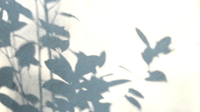 bladen skugga på väggen - abstract silhouette art bildbanksvideor och videomaterial från bakom kulisserna
