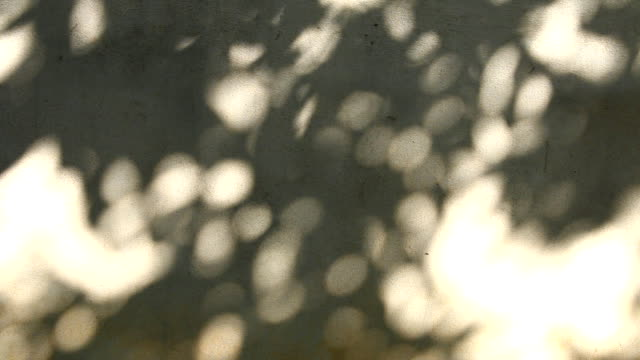Leaves shadow on the wall video