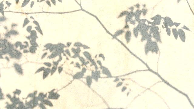 樹葉影子在牆上 - 影 個影片檔及 b 捲影像