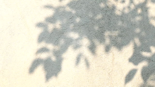 leaves shadow on the wall - palm tree filmów i materiałów b-roll