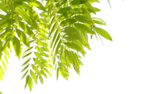 Leaves video