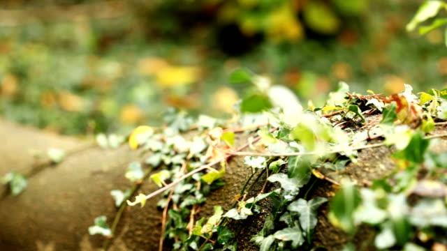 잎 (dolly 이동 - 아이비 스톡 비디오 및 b-롤 화면