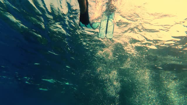 legs in flippers, fins. man swims in blue flippers underwater. Swimming male legs in blue flippers. under the water. Close up. snorkeling video