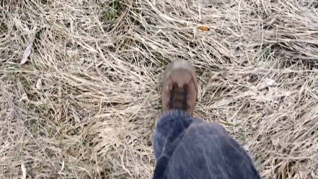legs in trekking boots walking on withered grass, above view video