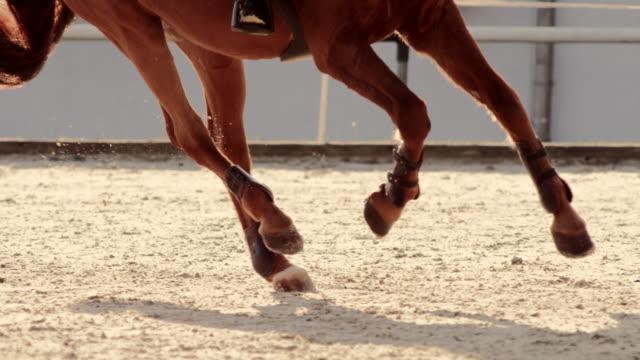 slo mo ts legs of a brown horse galloping in a sunny arena - arto inferiore animale video stock e b–roll