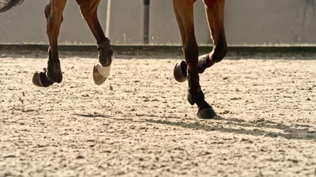 slo mo ds legs av en kastanjehäst som springer i en solig arena - racehorse track bildbanksvideor och videomaterial från bakom kulisserna