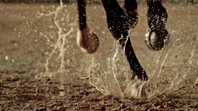 slo mo legs av en häst galopperar på våt mark - racehorse track bildbanksvideor och videomaterial från bakom kulisserna