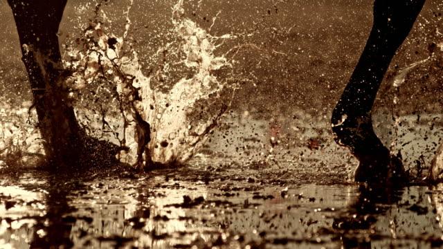 濡れた地面を走る馬のslo mo tsレッグ - 動物に乗る点の映像素材/bロール