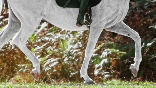 SLO MO TS Legs of a trotting white horse