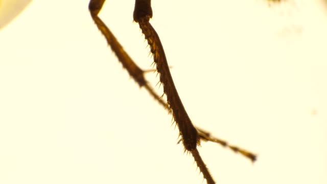 Legs of an Insect Detailed Microscopic Footage of insect legs animal antenna stock videos & royalty-free footage