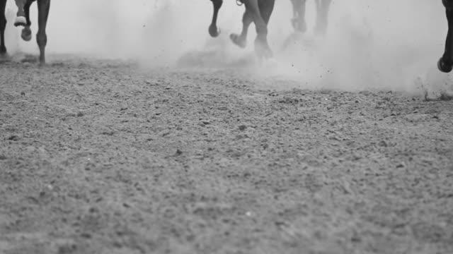 ben av hästar som galopperar. slow motion - häst tävling bildbanksvideor och videomaterial från bakom kulisserna