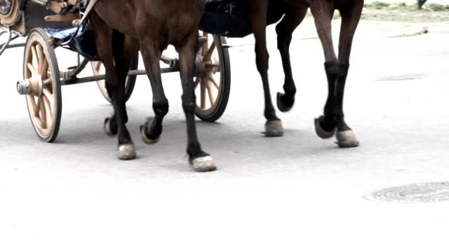 legs of horses in slow motion - cocchio video stock e b–roll