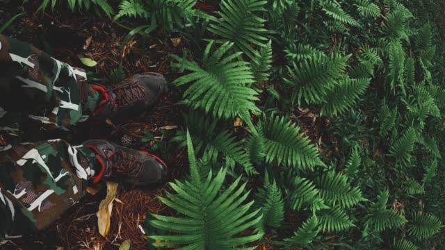 legs of men standing on fern field