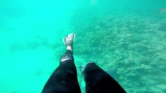 Legs with flippers underwater. video