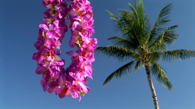 HD: Lei by a palm tree video