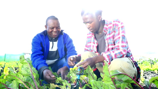 Lens flare as African Organic Farmers discuss crop video