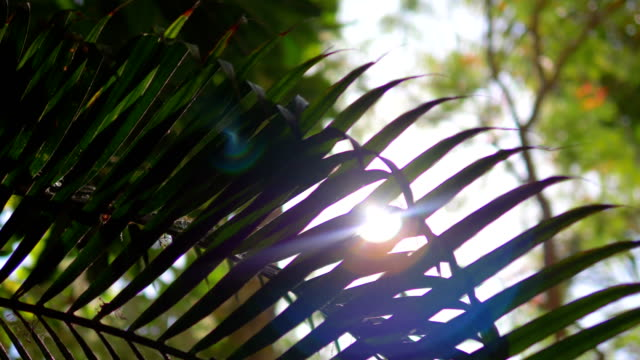 Lens flare behind tropical plants in 4k slow motion 60fps video