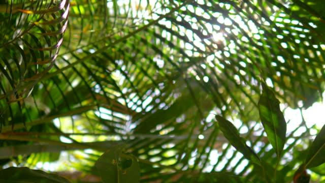 Lens flare behind tropical plants in 4k slow motion 60fps