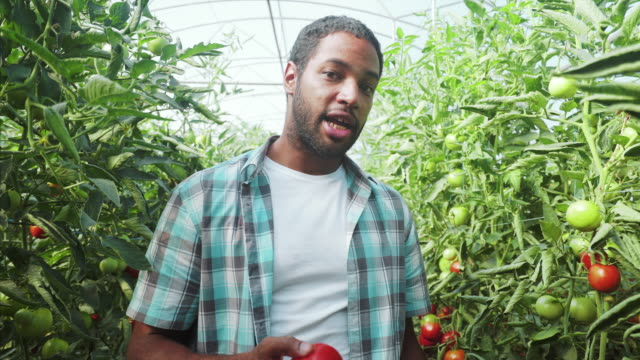Let`s talk about organic tomatoes.