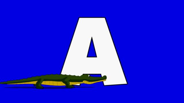 Lettera un e alligatore (primo piano - video