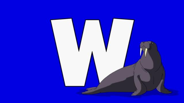 Buchstabe W und Walross (Vordergrund – Video