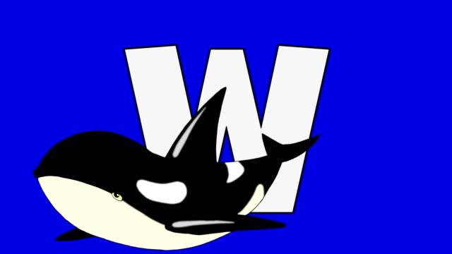 Buchstabe W und Walbeobachtung (Vordergrund – Video