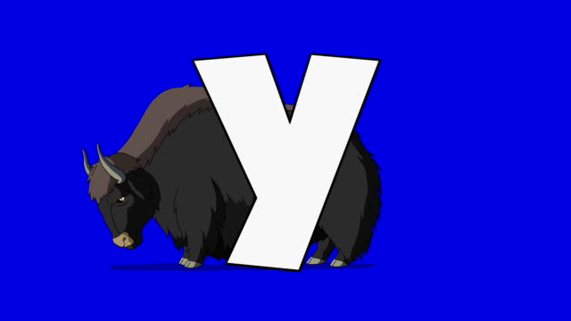 Letter Y  and  Yak  (background) video