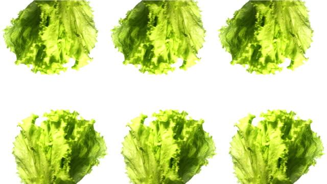 Salat auf weißem Hintergrund – Video