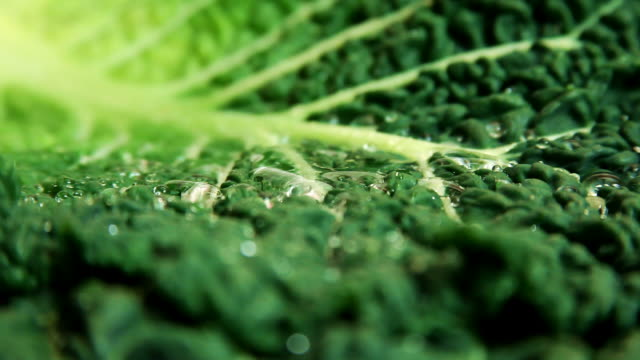 Lettuce with water drops video