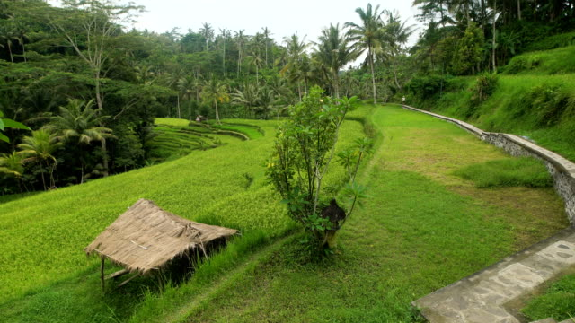 Level green hill surrounded by tropical jungle. Stone paved pedestrian path along the rainforest. Small hut with a thatched roof video