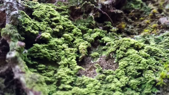 lichen and moss on tree lichen and moss on bark tree plant bark stock videos & royalty-free footage