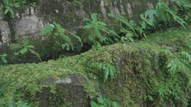 Lichen in forest rain