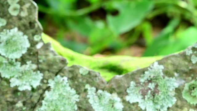 vídeos y material grabado en eventos de stock de liquen, musgo y plantas mayor zoom - musgo flora