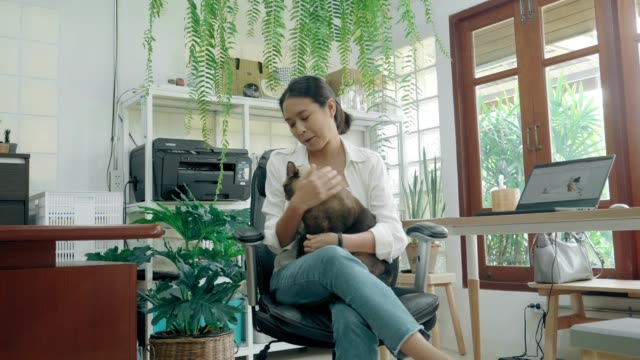 Life balance of Thai creative women and her love cat