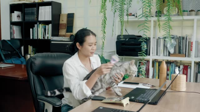 Life balance of Thai creative women while combing cat with love emotion
