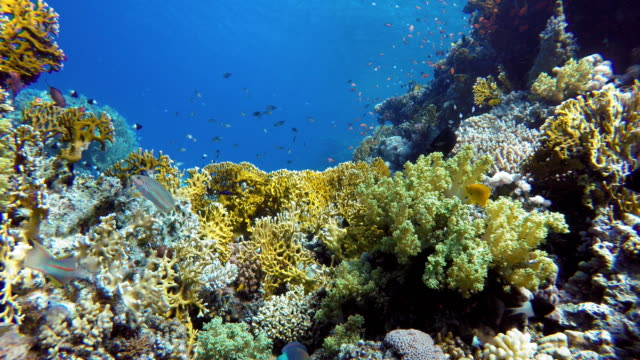life in the ocean. tropical fish and coral reefs. beautiful corals. - на морском дне стоковые видео и кадры b-roll