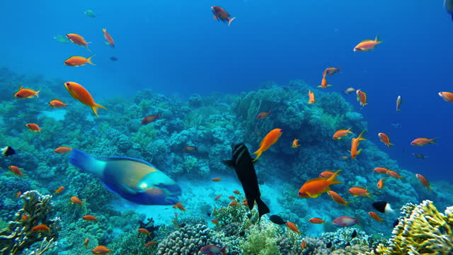Life in the ocean. Tropical fish and coral reefs. Beautiful corals. video