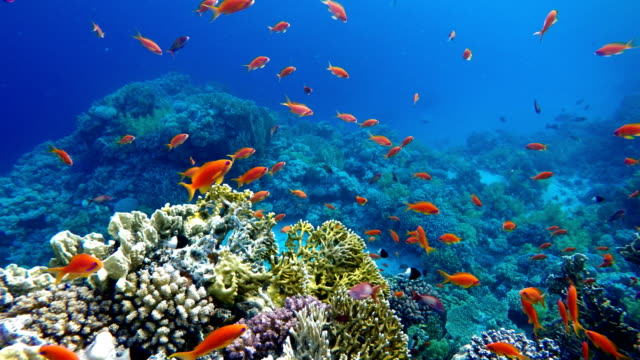 Life in the ocean. Tropical fish and coral reefs.