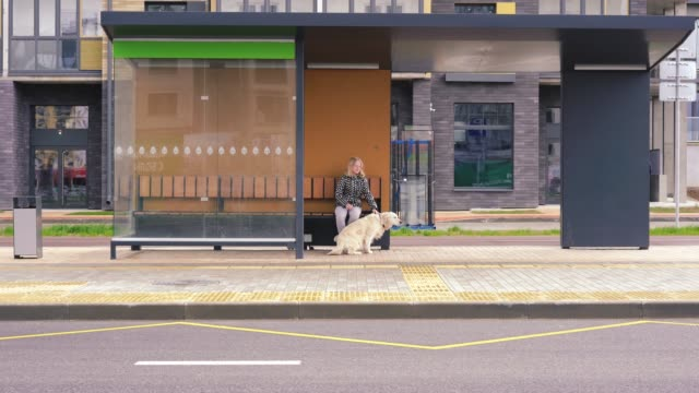 life with pets in the city. teenage girl sitting with her dog at a public transport stop, waiting for a bus life with pets in the city. teenage girl sitting with her dog at a public transport stop, waiting for a bus. bus stop stock videos & royalty-free footage