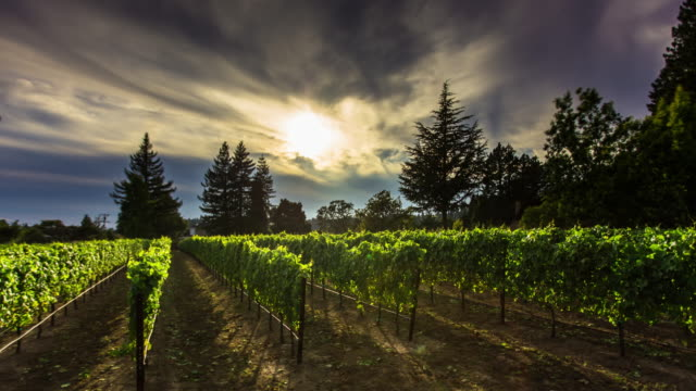 Light and Shadow in California Winery - Time Lapse video