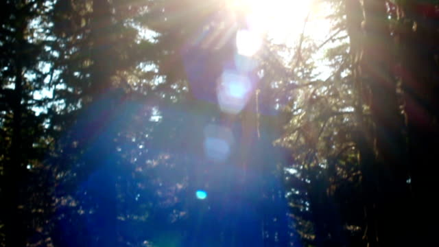 light beams trhrough misty trees in a forest at sunset - flare video stock e b–roll