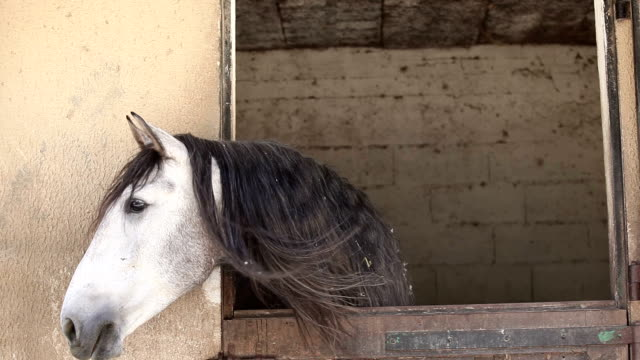 Light grey horse in its box video