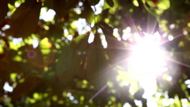 Light Leaks Through Tree Leaves video